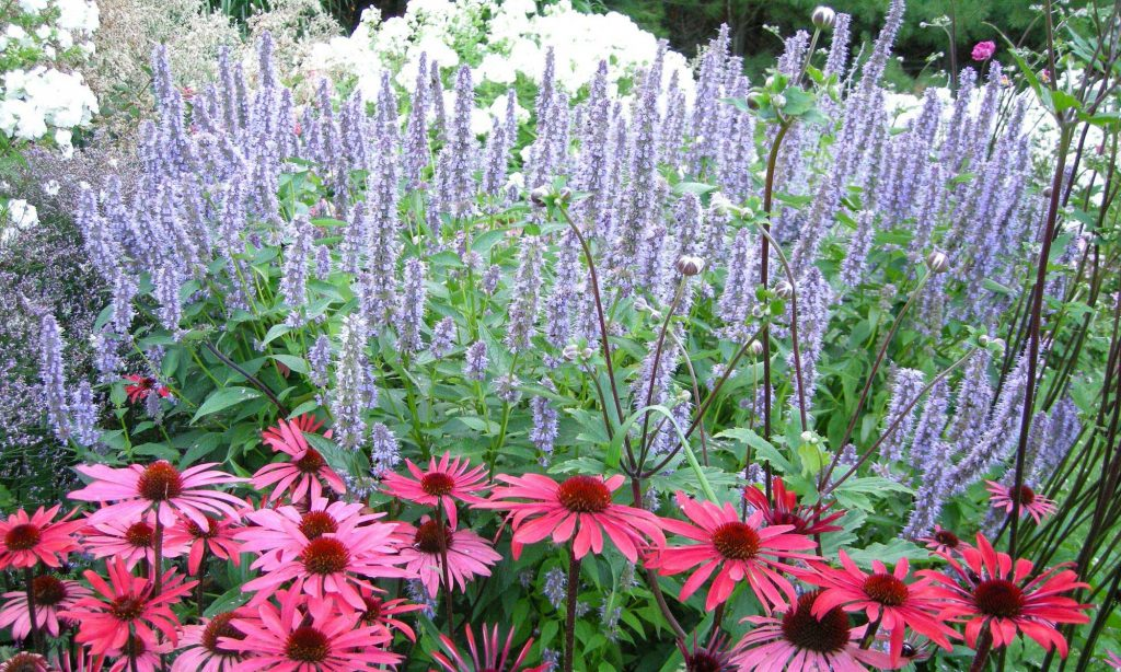 Perennial Gardens at Plant Paradise Country Gardens in Caledon, Bolton, Palgrave,ON