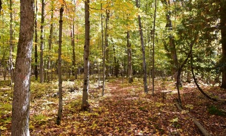 Hardwood Forest Trail at Plant Paradise Country Gardens