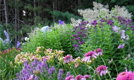 The Top 12 Long-Blooming Perennials